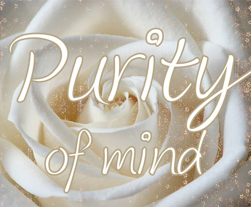 purity1-copy