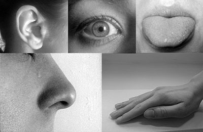 article-5-senses-in-poetry
